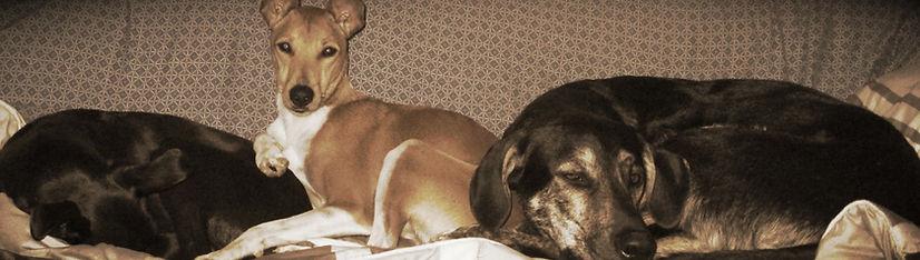 Montpellier éducateur canin, comportementaliste canin