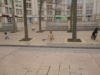 Yoko gère le centre ville