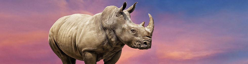 zoo_rhino_header.jpg