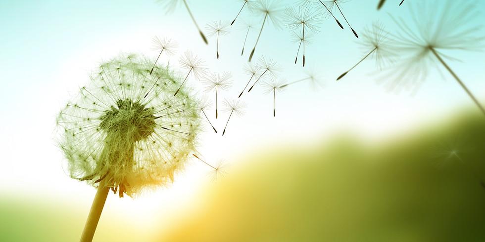 Mindfulness-Based Stress Reduction (MBSR) Orientation