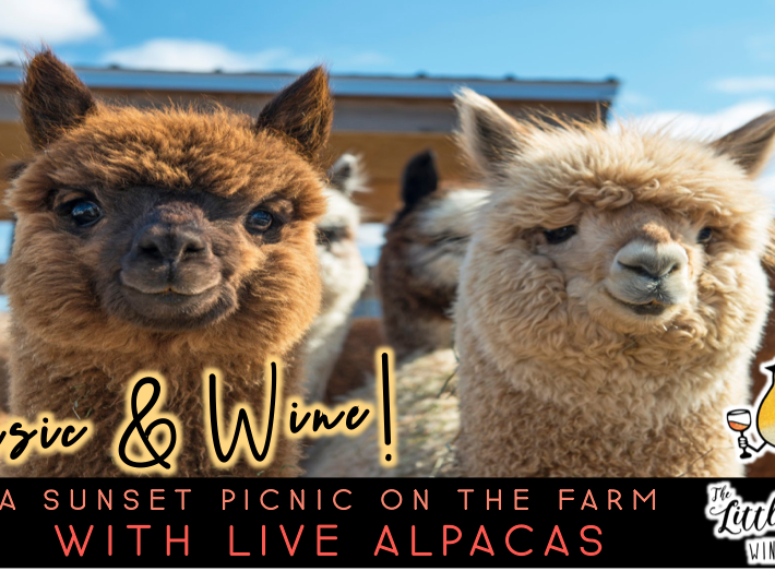 Music & Wine | Sunset Picnic with Alpacas (10/10 @ 4pm)