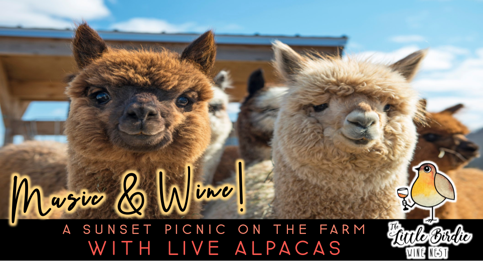 Music & Wine | Sunset Picnic with Alpacas