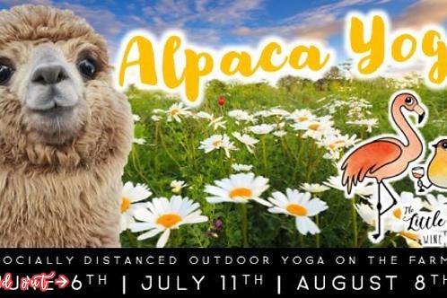 Alpaca Yoga: Socially Distanced Outdoor Yoga On The Farm