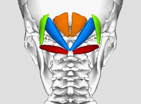 Sub occipital trigger point pain referral pattern symptoms and prevention.