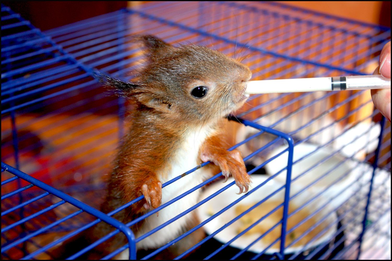 Nourrissage ecureuil