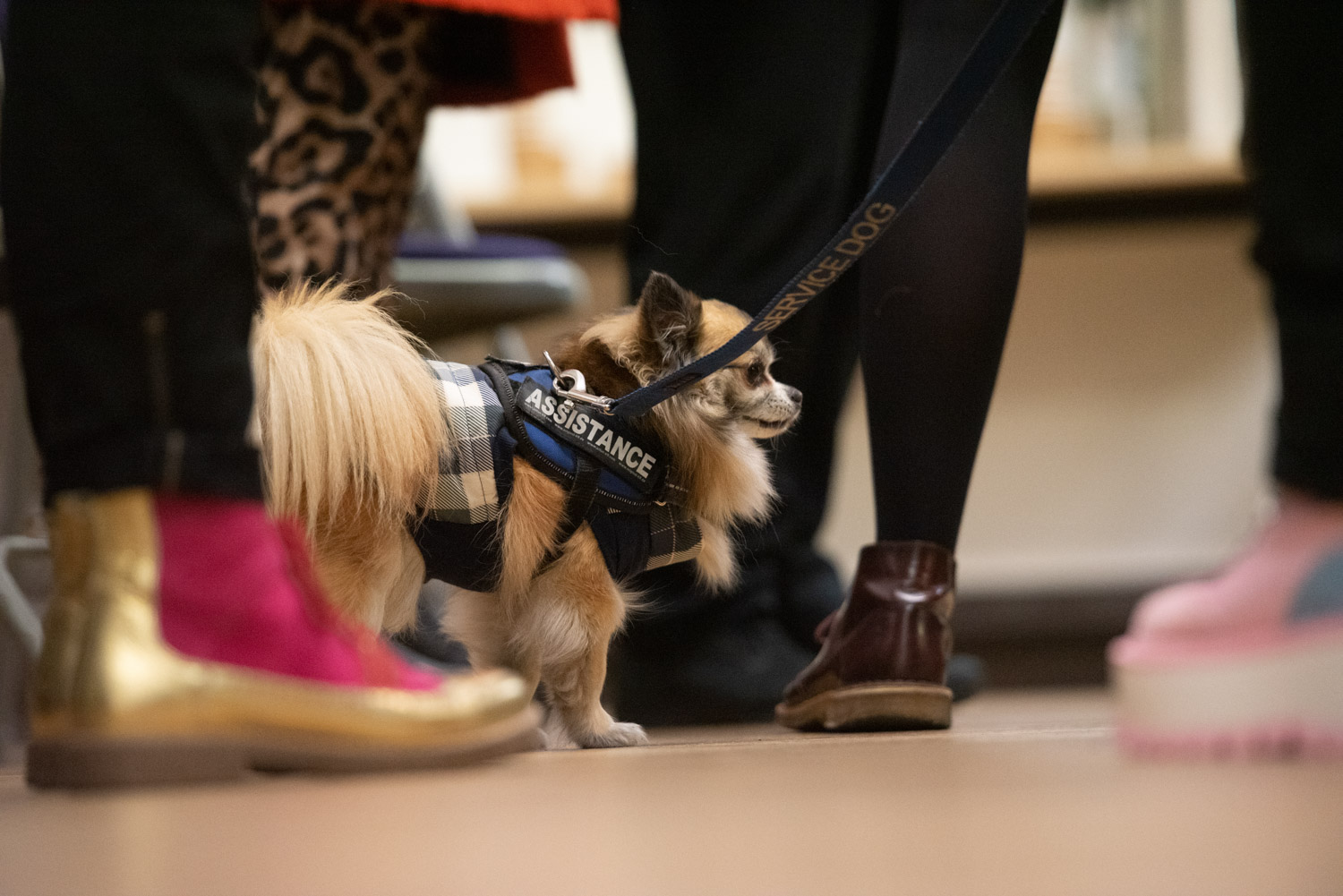 An assistance dog at it's owners feet during Women in Film discussion