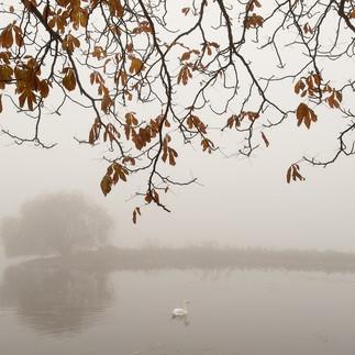 Søerne 2011
