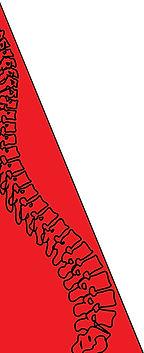 spine copy.jpg
