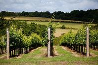 Bluebell-Vineyard-2.jpg