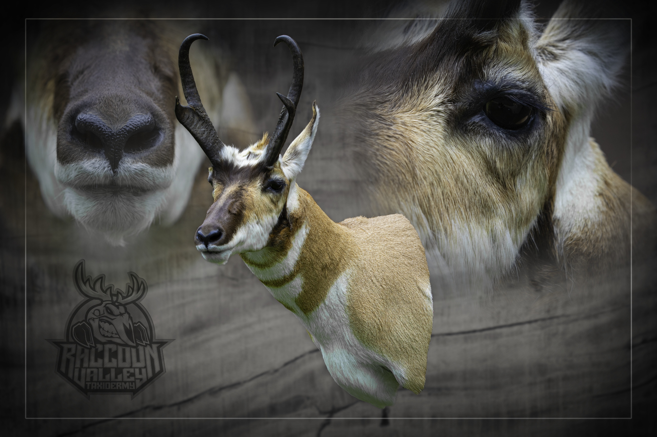 Montana Pronghorn Antelope Mount