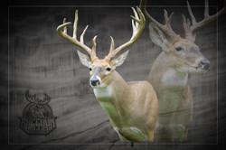 Iowa Whitetail Mount, Youth Season