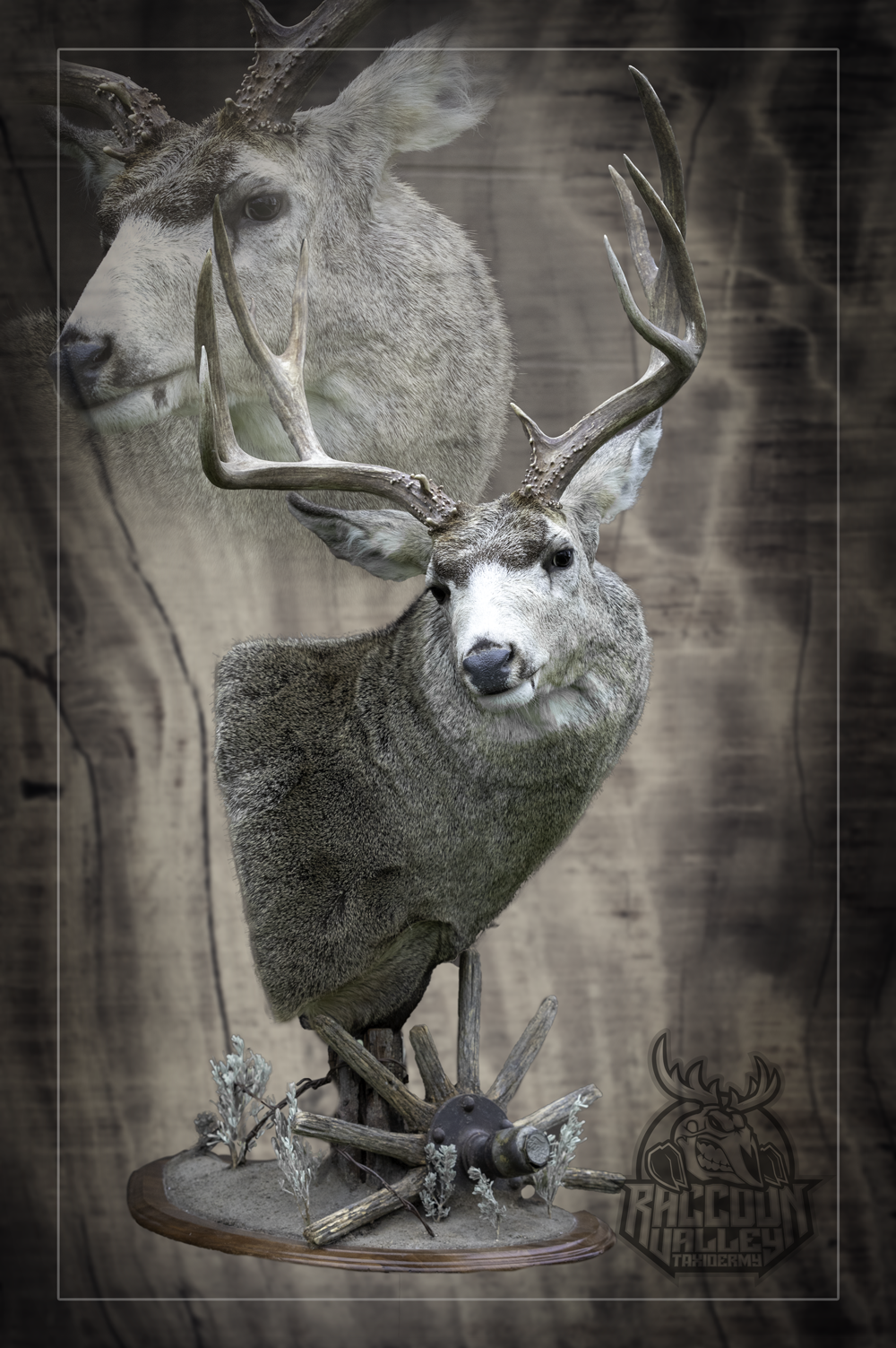 Mule Deer Taxidermy