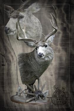 Mule Deer Taxidermy