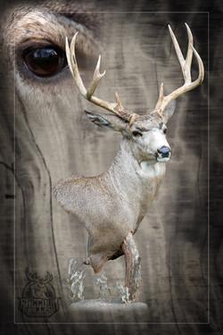 Mule Deer Pedestal Mount
