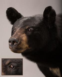 Black Bear Taxidermist in Iowa