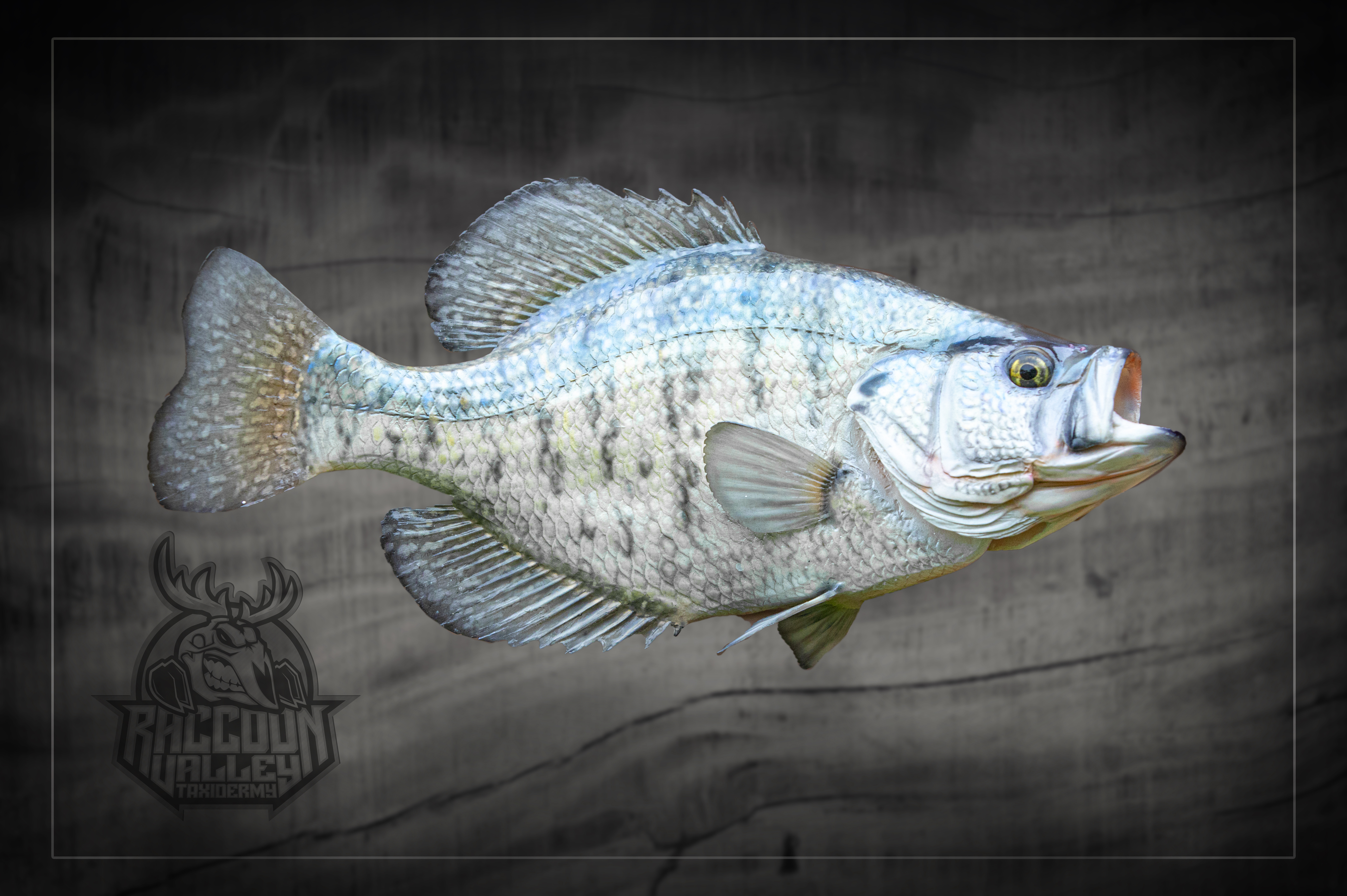 Crappie Reproduction