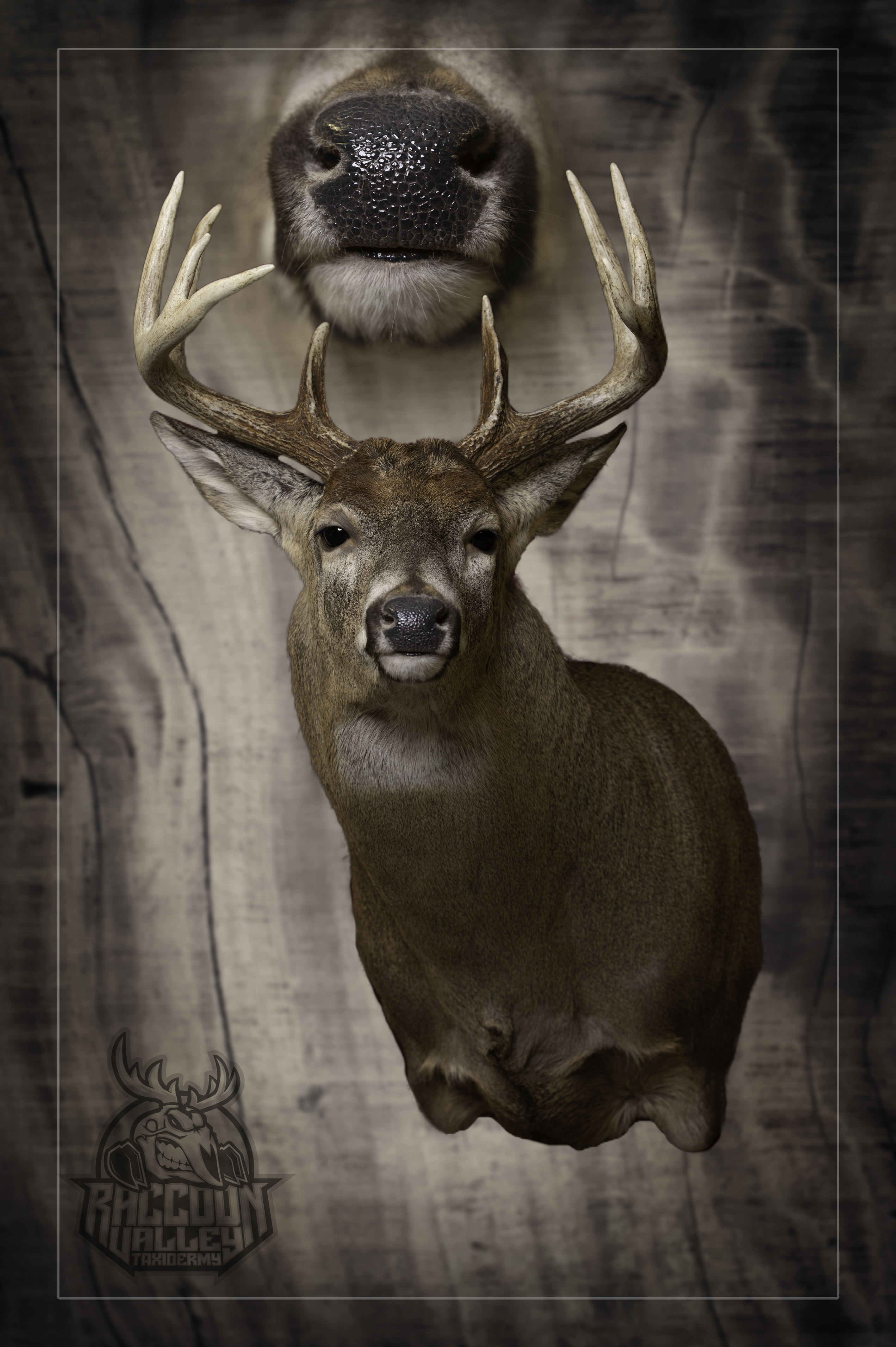 Semi-Sneak Whitetail Deer