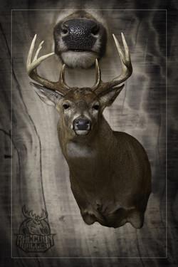 Semi-Sneak Whitetail Deer