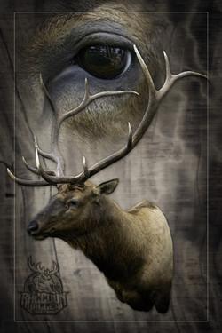 Colorado Elk Taxidermy, taxidermist