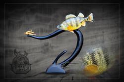 State Champion Fish
