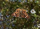 Heal Butterflies and wildflower.jpg