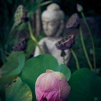 H.E.A.L main image - lilac - buddha.jpg