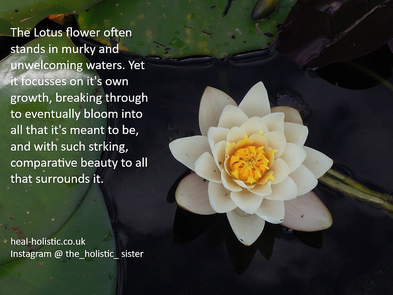 Holistic Sister - Lotus Flower Quote.jpg