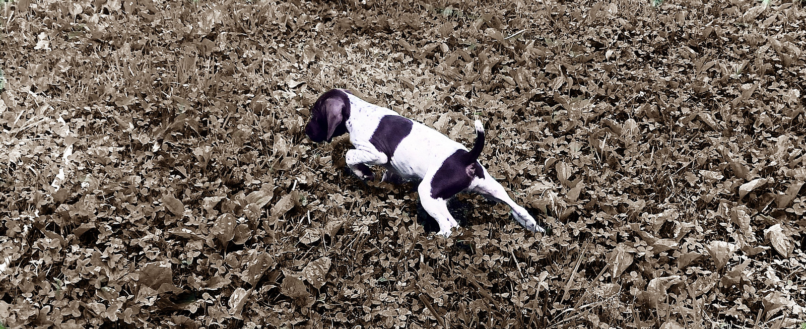 Dog Kennel | Point Blank Kennels