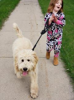 Molly on a walk