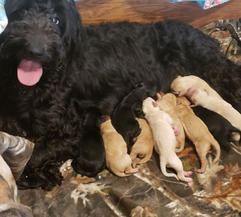 Millie and pups