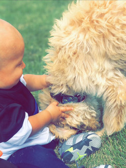 Cream Goldendoodle and baby