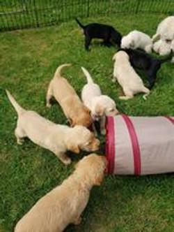 puppy socilization