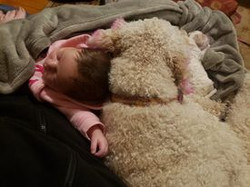 Goldendoodle with baby
