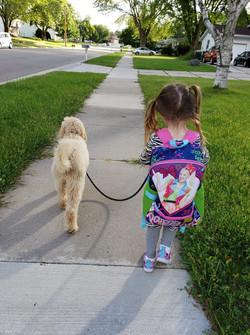 kid walking goldendoodle