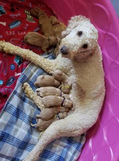 Molly & pups