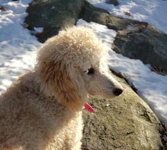 Molly hiking