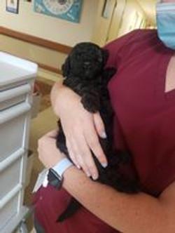 puppy in a nursing home
