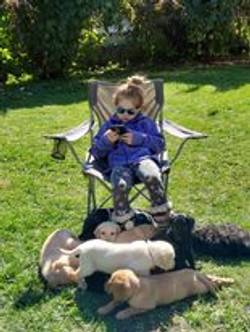 kid sitting with puppies