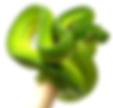 Morelia-viridis-Jayapura-femelle-adulte-