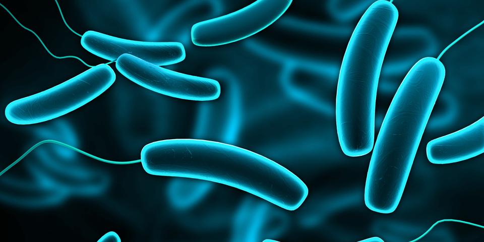Bacteria-960x480.png