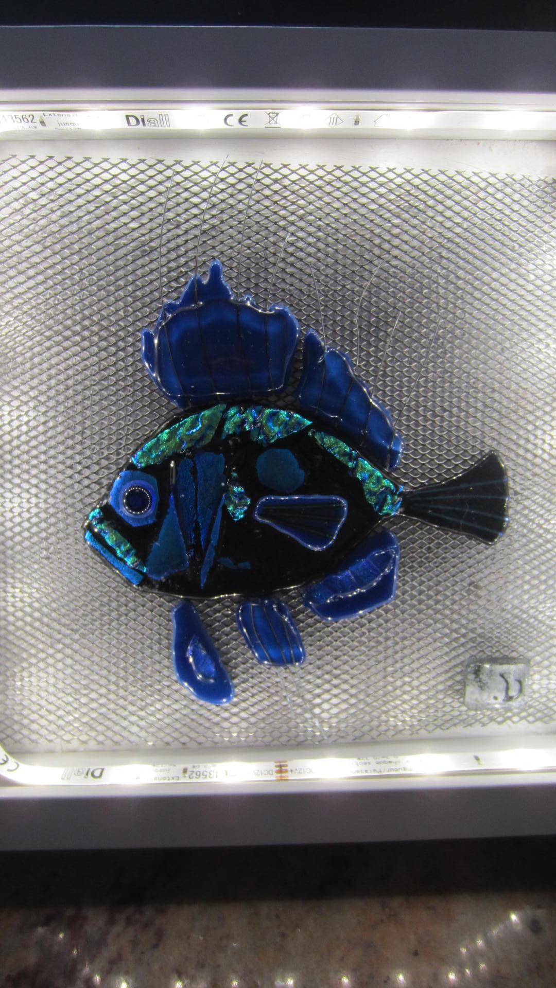 mérou bleu