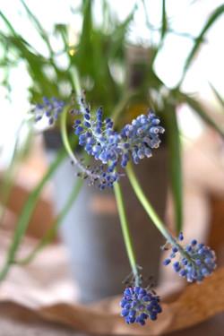 hyacinth lifestyle photography