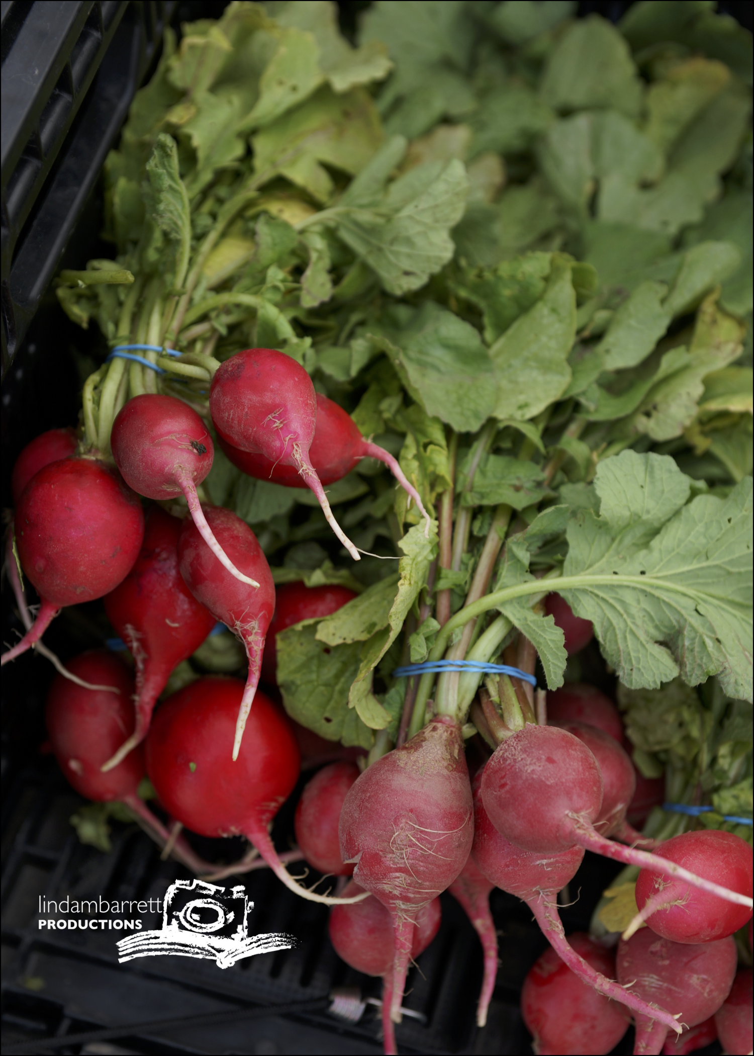farmers market lifestyle_radishes