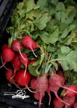 farmers market lifestyle_radishes
