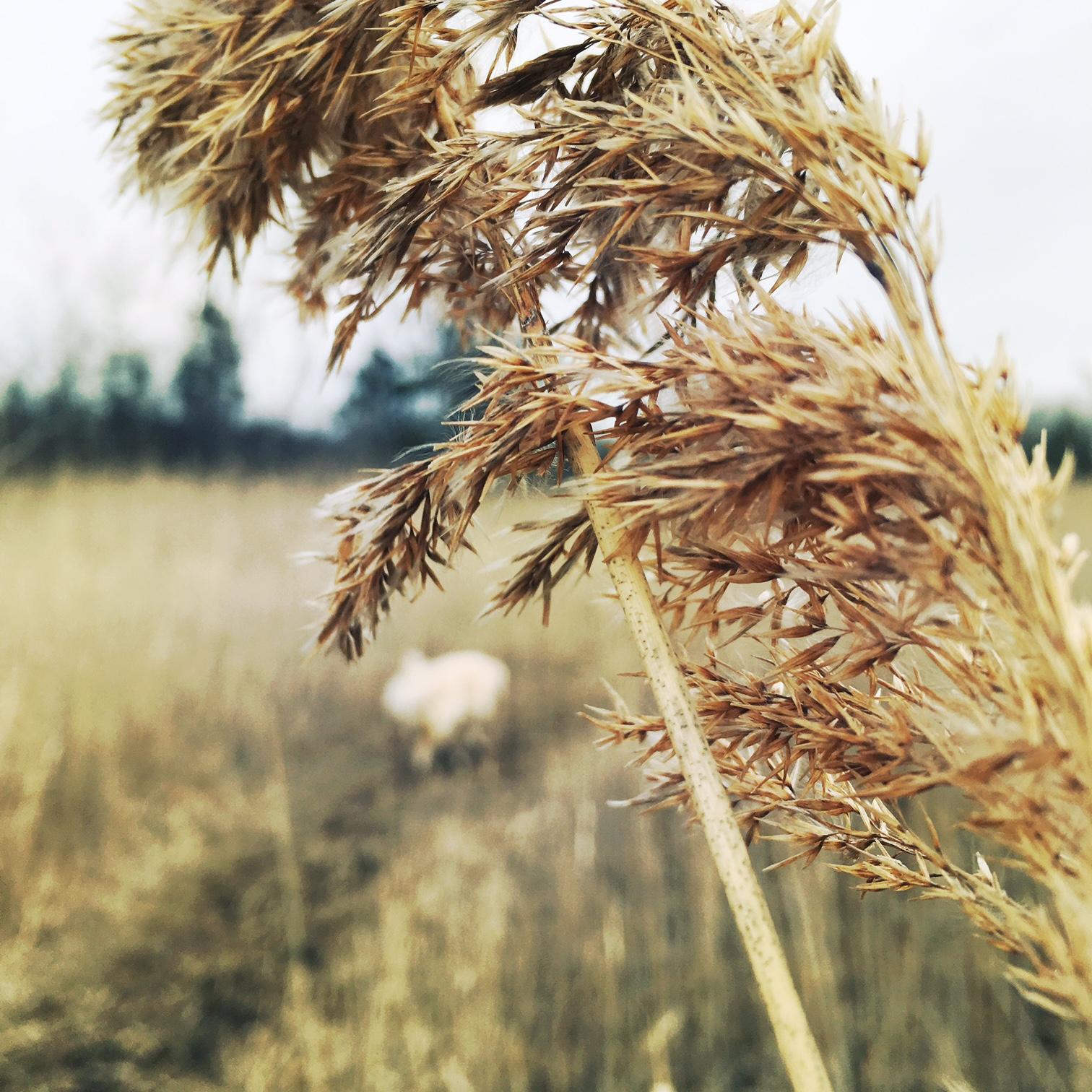wrigs_grass.jpg