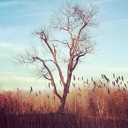 bird grass.JPG