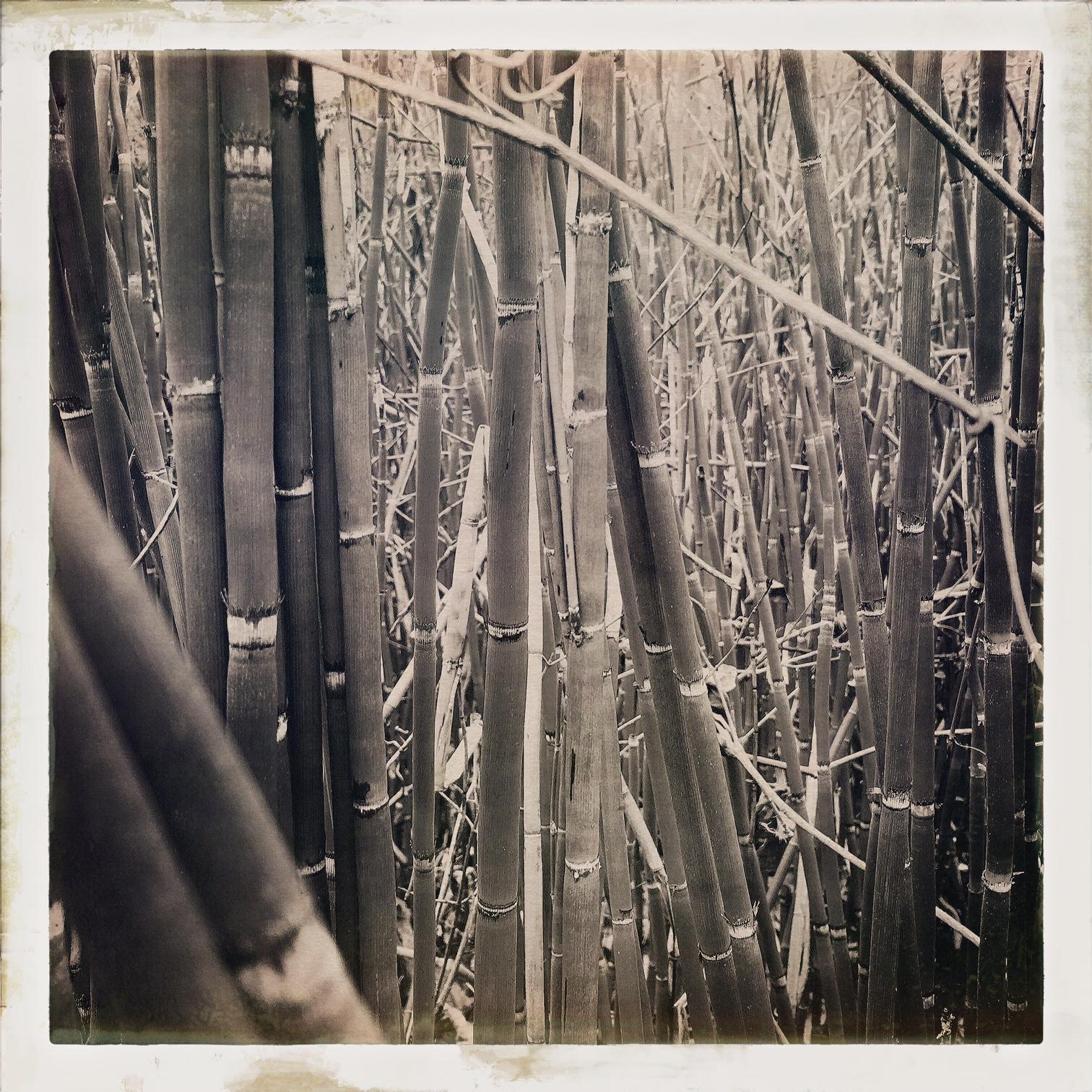 bamboo_bw.jpg