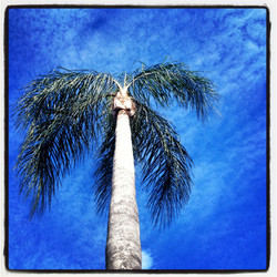 florida palm travel photography