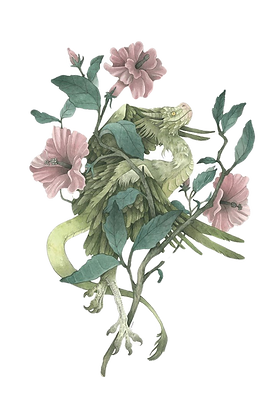 transparent%2520dragon%2520hibiscus_edit