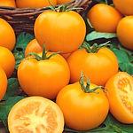 pomidor-romus-2.jpg